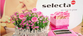 """<span class=""""field-content"""">Dianthus Selecta one</span>"""