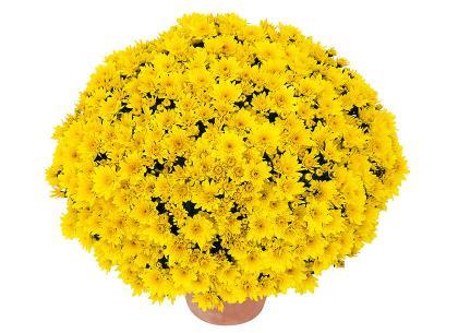 Post-it jaune