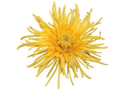 Spiro yellow