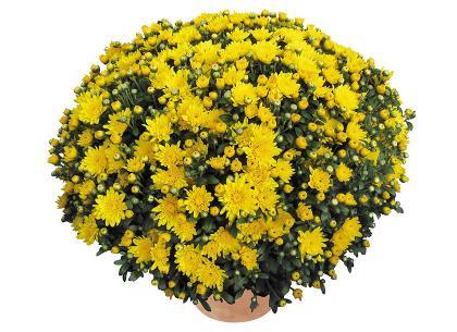 Stylo jaune
